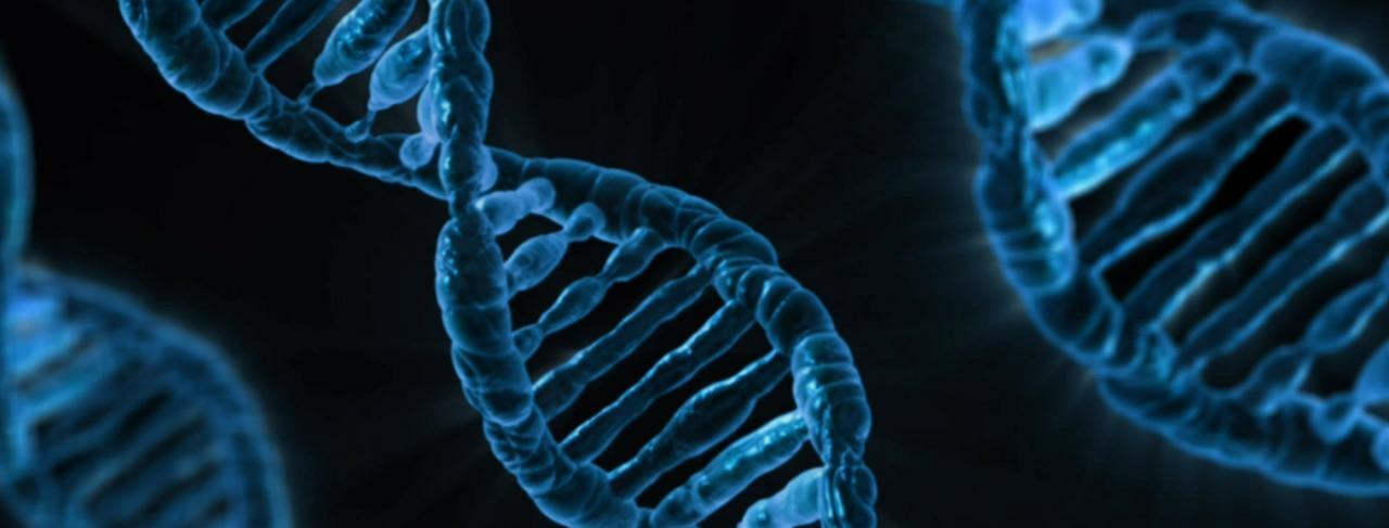 The latest news on Human Technopole scientific activities